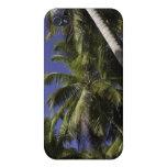 Palmeras en una isla tropical del Caribe iPhone 4 Funda