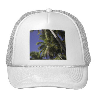 Palmeras en una isla tropical del Caribe Gorra