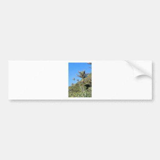 Palmeras Nueva Zelanda de Nikau Etiqueta De Parachoque