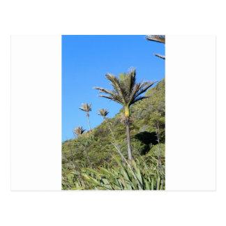 Palmeras Nueva Zelanda de Nikau Postales