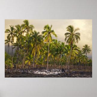 Palmeras, parque histórico nacional Pu'uhonua o 2 Póster