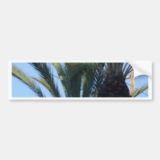 Palmeras soleadas pegatina de parachoque
