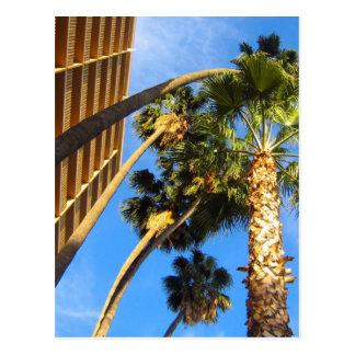 palmeras tarjeta postal