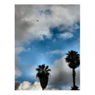 palmeras y cielo tarjeta postal