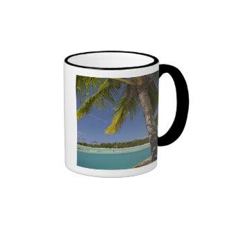 Palmeras y laguna, centro turístico isleño de la e tazas