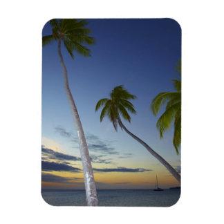 Palmeras y puesta del sol, centro turístico isleño imanes rectangulares