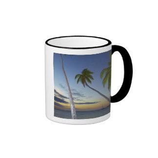Palmeras y puesta del sol, centro turístico isleño taza