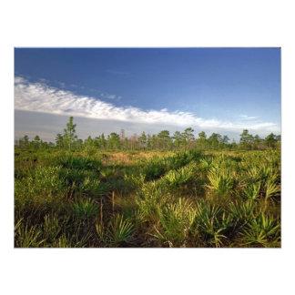 Palmetto Prairie. Triple N Ranch, Osceola Co., Fl. Photo Print