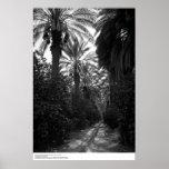 Palms and Orange Trees Near Desert, 1966 Posters