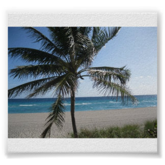 Palms at Beach Poster