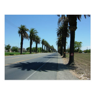 Palms Central California Valley Postcard