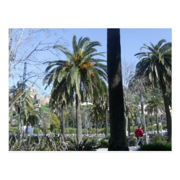 davewilks Palms in Malaga Postcard