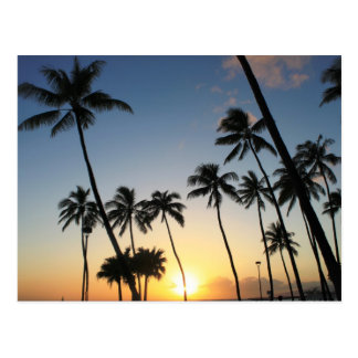 Palms In The Sunset Postcard