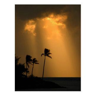 Palmtrees en el sunet postal
