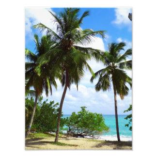 Palmtrees en la ampliación tropical de la foto del