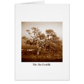 Palo Alto Foothills Card
