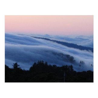 Palo Alto trail Postcard