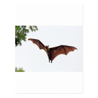 Palo de fruta del zorro de vuelo en cielo postal