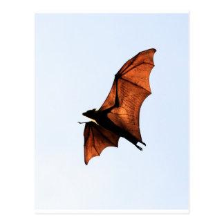 Palo de fruta (zorro de vuelo) postales