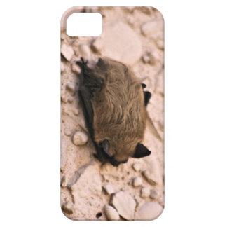 Palo de pequeño Brown iPhone 5 Carcasas