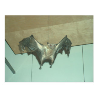 "Palo enorme ""zorro de vuelo "" postales"