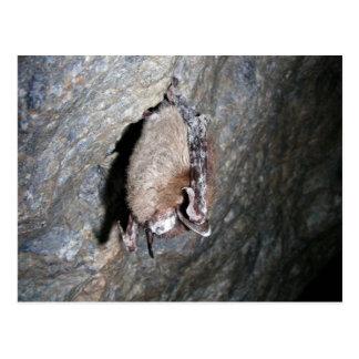 palo Pequeño-marrón que exhibe síndrome de la Blan Tarjeta Postal