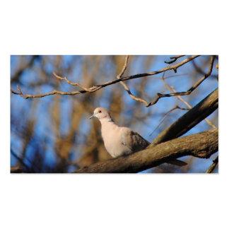 Paloma agarrada eurasiático tarjetas de visita