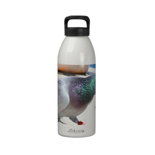 Paloma autoguiada hacia el blanco en un yate botellas de agua reutilizables