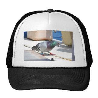 Paloma autoguiada hacia el blanco en un yate gorra