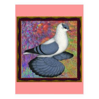 Paloma azul del trago enmarcada postales