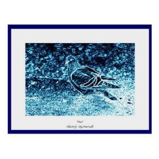 Paloma azul postal