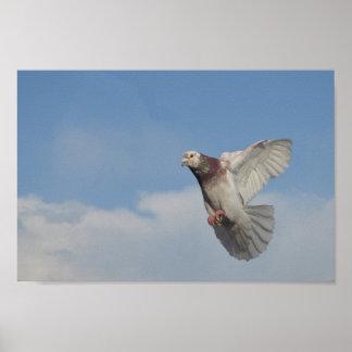 Paloma blanca bajo cielo azulado póster