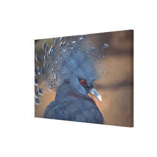 paloma coronada impresiones de lienzo