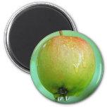 Paloma de Apple Iman De Nevera