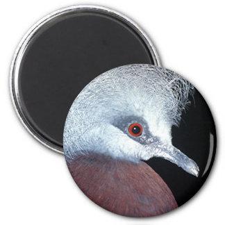 paloma de la corona del scheepmaker imán redondo 5 cm