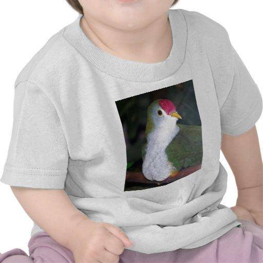 paloma de la fruta camisetas