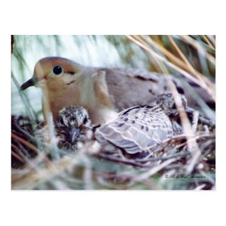 Paloma de la madre y postal joven