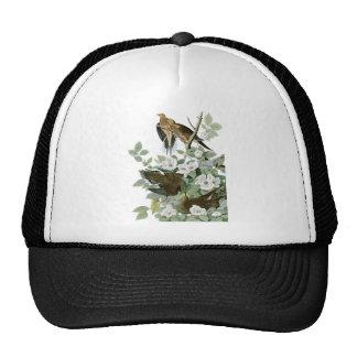 Paloma de luto de la paloma de John James Audubon  Gorro