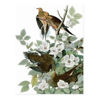 Paloma de luto, John James Audubon Tarjeta Postal