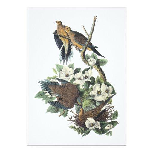 Paloma de luto, Juan Audubon Invitación 12,7 X 17,8 Cm
