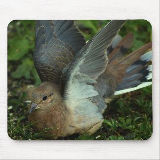 Paloma de luto que separa sus alas alfombrilla de ratón
