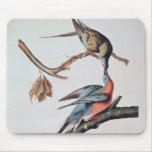 Paloma de pasajero, de 'pájaros de America Alfombrillas De Ratones