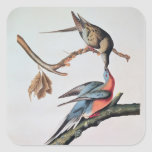 Paloma de pasajero, de 'pájaros de America Pegatina Cuadrada