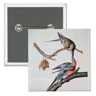 Paloma de pasajero, de 'pájaros de America Pin Cuadrado