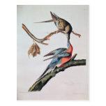 Paloma de pasajero, de 'pájaros de America Tarjeta Postal