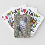 Paloma de roca baraja de cartas