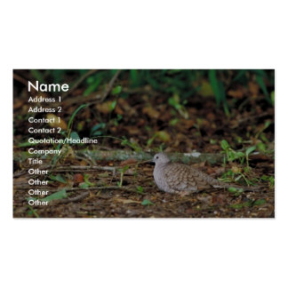 Paloma del terreno común tarjetas de visita
