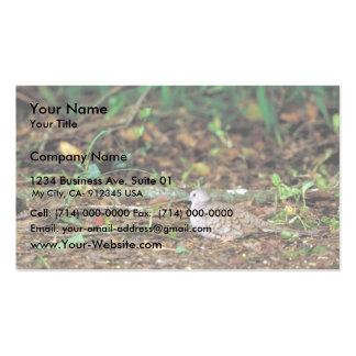 Paloma del terreno común tarjeta de visita