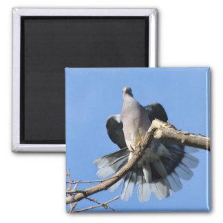 paloma Pájaro-Banda-atada Imán Cuadrado