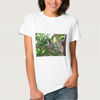 Paloma que se sienta en árbol polera